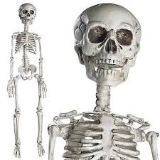 posable skeleton 30 posable creepy skeleton spooky movable joints haunted