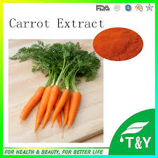 popular carrot oil buy cheap carrot oil lots from china carrot oil