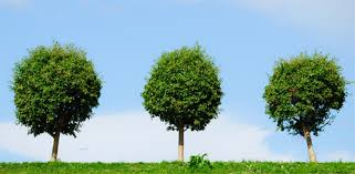 the three trees anonymous baby boomers guide