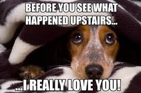 Cute Dog Memes - dog meme monday destructive dogs troubled dogs funny dog