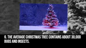 Real Christmas Trees Manchester Top 10 Facts About Christmas Trees Top 10 Facts Life U0026 Style