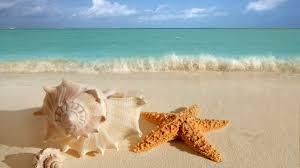 starfish and seashells on the beach wallpaper