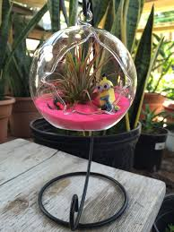 air plant terrarium kit with free stand hanging glass