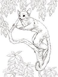 senegal bush baby coloring free printable coloring pages