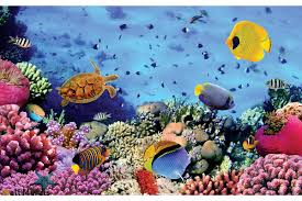 mural sea bottom with many fishes 3d effect wallpapers mural sea bottom with many fishes 3d effect