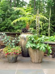 potted plants for patio privacy home outdoor decoration