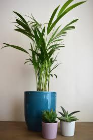 Best Houseplants Plant Lady