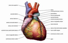 Anatomy And Physiology Class Anatomy And Physiology Study Guide