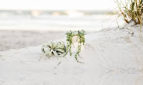 events archive the coastal succulent wilmington nc succulents