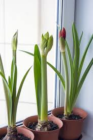 free images bloom collection houseplant house plant