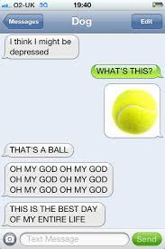 Funny Text Message Memes - text message meme 035 dog text thats a ball comics and memes