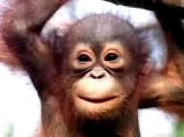 Baby Monkey Meme - monkey singing happy birthday song funny youtube