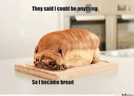 Dog Meme - not sure if bread or dog by puppetmaster95 meme center