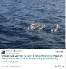 asian dolphin ring holder images Cut up your six pack rings warns iwdg after dolphin death in cork png