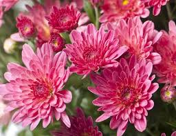 12 Best Annual Flowers For by Top 15 Fall Blooming Flowers For A Perennial Garden