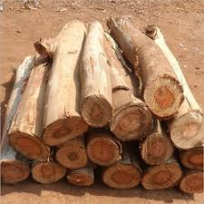 timber wood log wood log indian timber industries