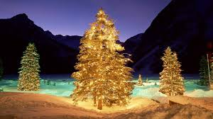 Outdoor Lighted Christmas Decorations 12 Outdoor Lighted Christmas Trees Ideas All About Home Design