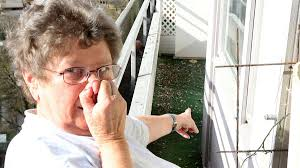 tauben auf dem balkon nachbar lockt tauben an lärm und vogelkot auf dem balkon wohnen