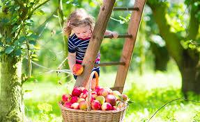 how to grow a fruit tree eco treeeco tree