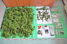 cannabis im garten cannabis im garten und im wohnzimmer angebaut kitzb禺hel