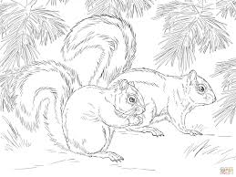 mexican fox squirrel coloring page free printable coloring pages