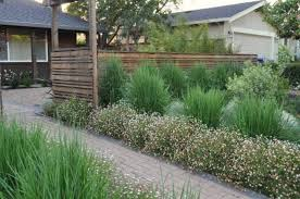 front yard landscaping with ornamental grasses and walkway