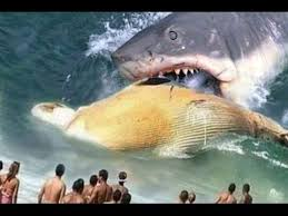biggest megalodon shark deluxe biggest spider in the world images worlds largest megalodon