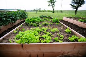 build your own raised flower vegetable bed the pioneer woman