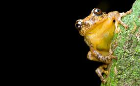 frogs birds lizards what u0027s behind the spate of new discoveries