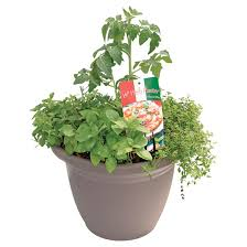 herbs planter vegetables and herbs planter rona