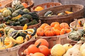 the modern farmer guide to winter squash varieties modern farmer