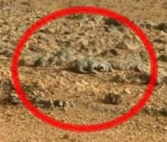imagenes de marte ocultas por la nasa la nasa muestra otra extraña criatura en la superficie de marte