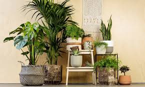 indor plants house plants australia guide to the best indoor plants
