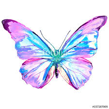 beautiful pink butterfly watercolor isolated on a white stock photo