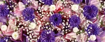Flower Screen Backgrounds - free wallpaper free flower wallpaper dual screen flower