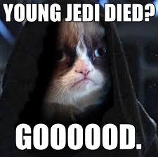 Star Wars Cat Meme - 21 animals celebrating star wars wow gallery ebaum s world
