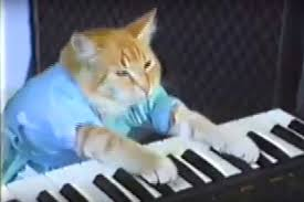 Keyboard Cat Meme - the most popular cat videos ever people com