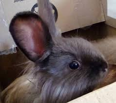 bunny branola rabbit conditioning supplement