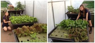 endless food systems fish powered aquaponic gardens selling