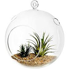 amazon com largest jumbo size glass globe terrarium 9 inches