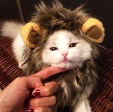 Kitten Halloween Costumes Pet 66 Cute Cats Images Animals Cute Cats Cat