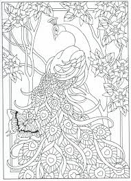 peacock coloring page for adults 7 31 u2026 pinteres u2026