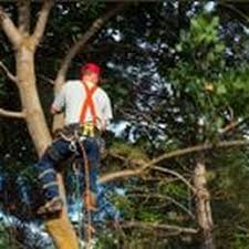 browns tree brown s tree service and land clearing 18 photos landscaping