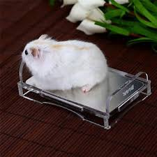Hamster Bed Pet Cool Mat Rat Bed Cooling Mouse Summer Pad Hamster Squirrel
