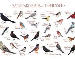 Backyard Birds Utah Maryland Backyard Birds Field Guide Art Print Watercolor