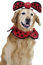 Extra Large Dog Halloween Costumes Golden Retriever Halloween Dog Costumes Amazon