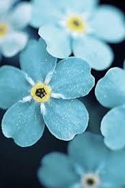what spring flowers bloom when u2013 fresh design pedia