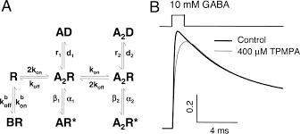 developmental changes of gaba synaptic transient in cerebellar