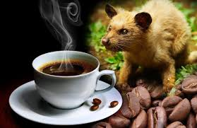 Luwak Coffee kopi luwak what makes the coffee the most expensive in the world