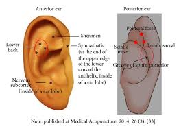 study of acupuncture for low auricular point acupressure to manage chronic low back in